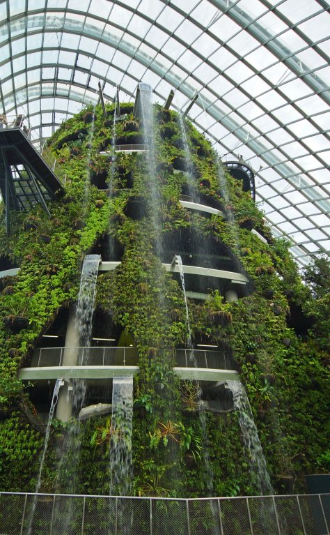 Cloud Forest | Singapore